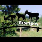 სკოპელოსის გამოცდილება
