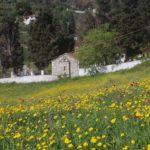 Skopelos skopelos luonto