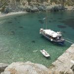 Skopelos sea escursione delfino di skopelos