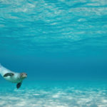 Skopelos sea excursion dolphin of skopelos