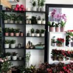 Skopelos anthokipos flower shop